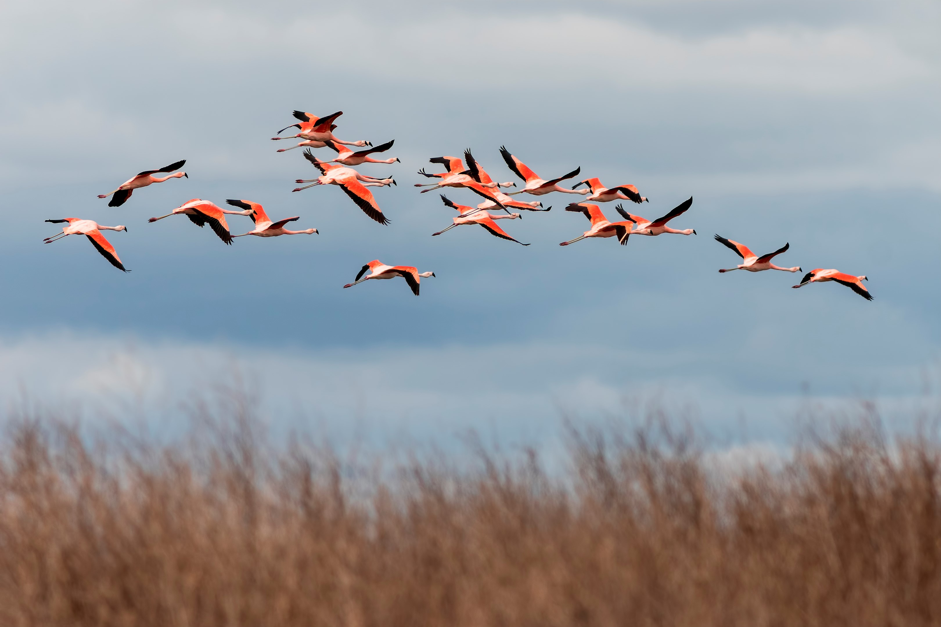 Mirar las aves, una pasión que mueve multitudes | Descubrir Turismo